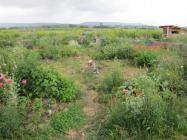 lechantducosmospepiniereetproductionde_jardin-en-mai.jpg
